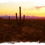 Home, Sweet Arizona
