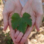Giveaway   Vinotherapie by Caudalie {sponsored}