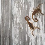 7 Things I've Learned {the hard way} About Scorpions