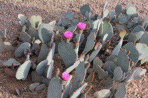 pic8 cactus
