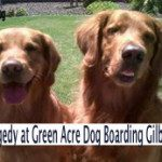 Why the Green Acre Gilbert Dog Tragedy reminded me of my first loves!