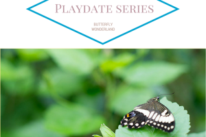 butterfly playdate