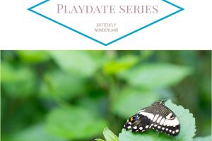 butterfly playdate