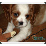 Best Practices to Cope with the Loss of a Pet