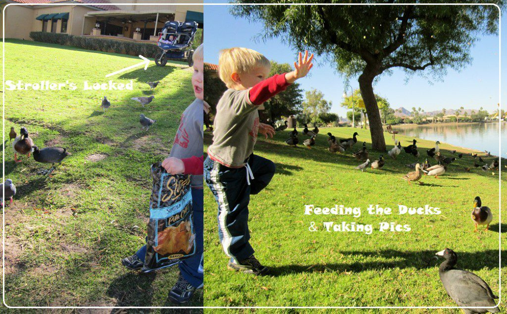 SMB- Stories that Save Feeding the Ducks