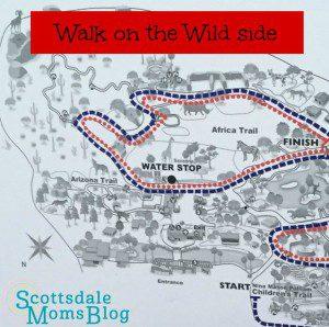 wild walk