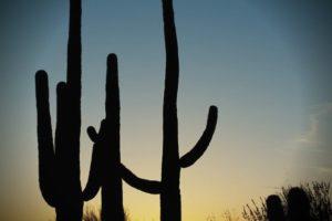 saguaro-cactus-754842_960_720
