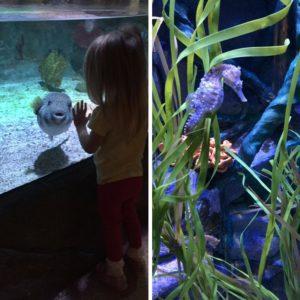 Making new friends at the Sealife Aquarium