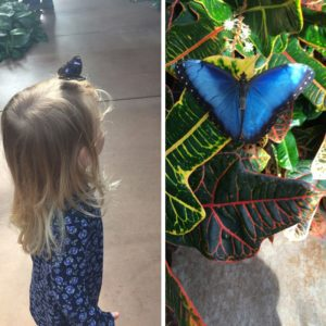 You never know where the butterflies will land at Butterfly Wonderland!