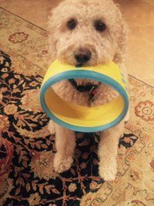 dog toy hurrik9