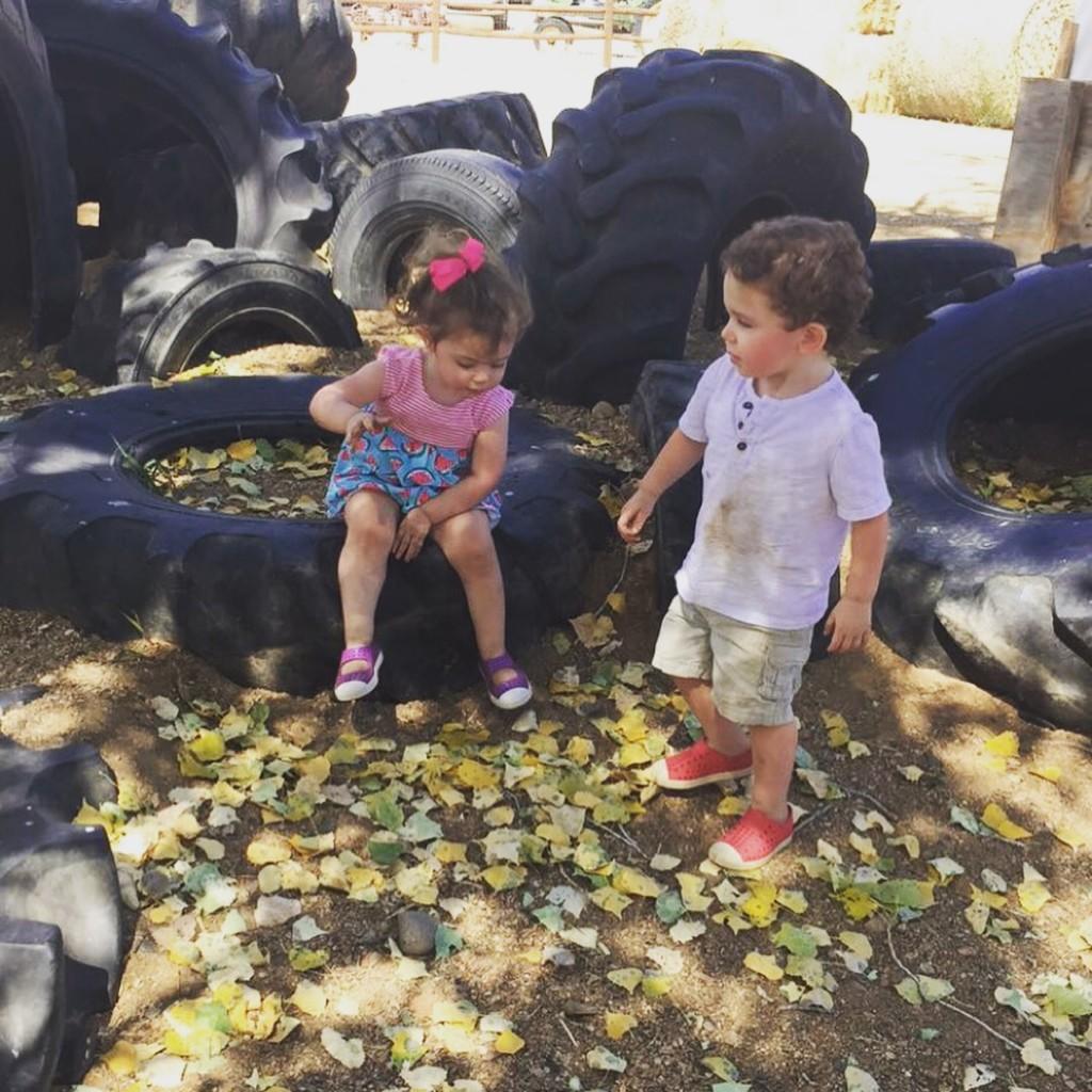 Mortimer farms