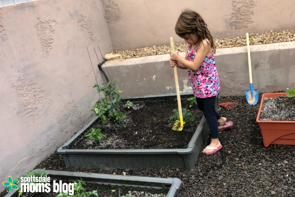 Planting A Backyard Garden growing a backyard garden in the desert: part two