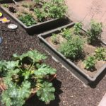 Growing a Backyard Garden in the Desert: Part three