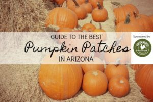pumpkin patches 2