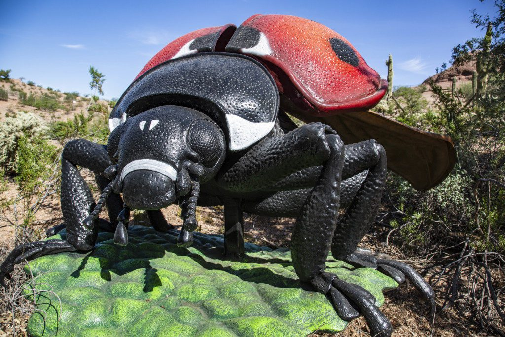 bugs exhibit