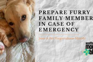 prepare furry family members in case of emergency