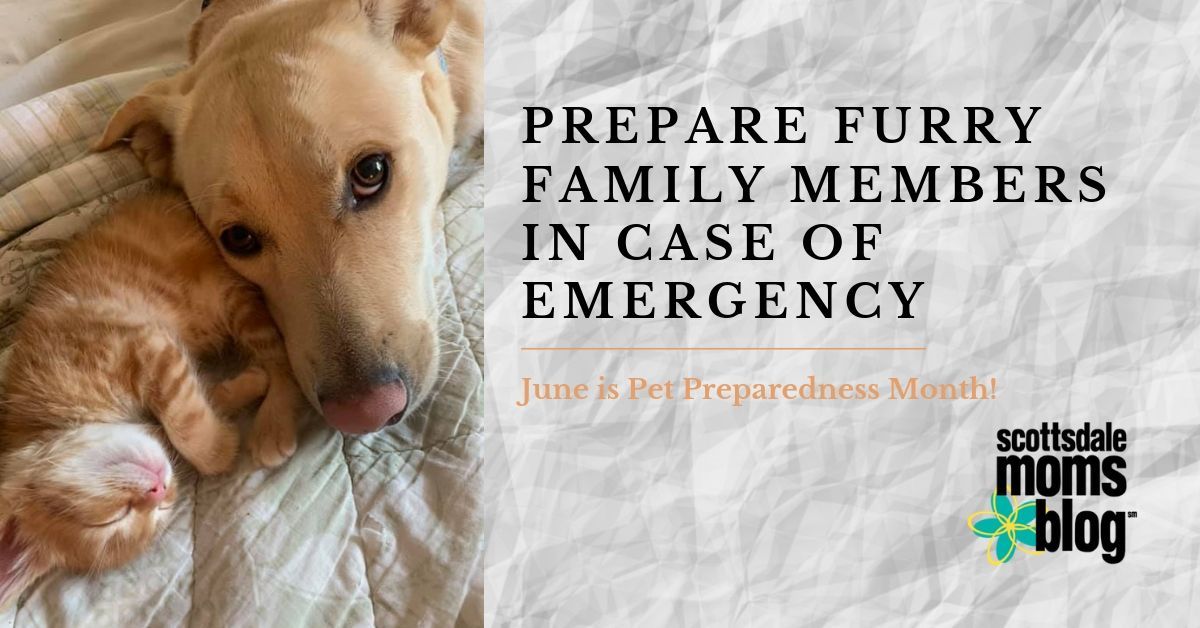 prepare furry family members in case of emergency