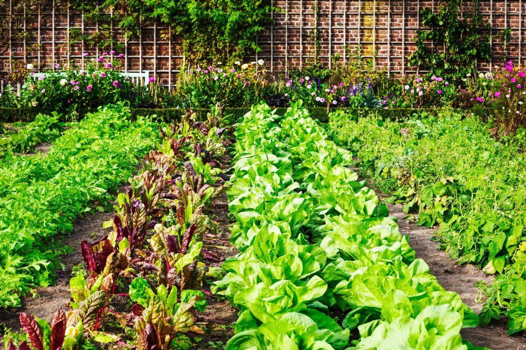Organic Stainable Garden